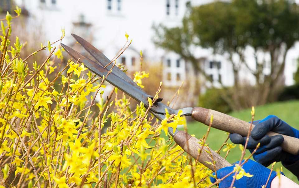 Spring Home Maintenance List